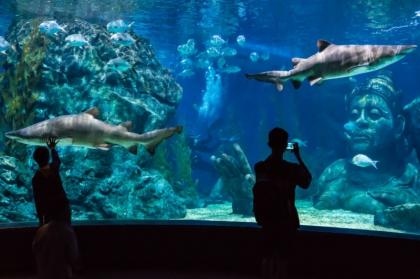 暹罗海洋世界