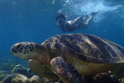 APO岛看海龟