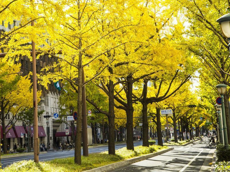 大坂日航酒店,大坂日航酒店,Hotel Nikko Osaka