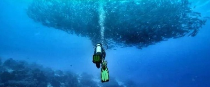 限量发售的海底世界,教你如何申请「诗巴丹」潜水名额!