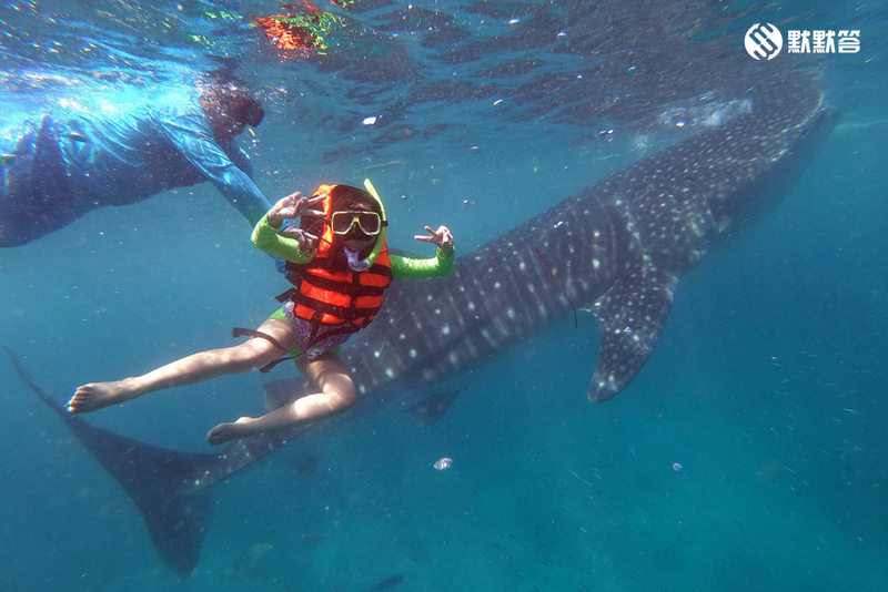 Oslob看鲸鲨,Oslob与鲸鲨同游,Oslob Whale Shark Watching