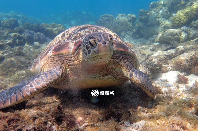 APO岛看海龟,APO岛看海龟,Apo Island