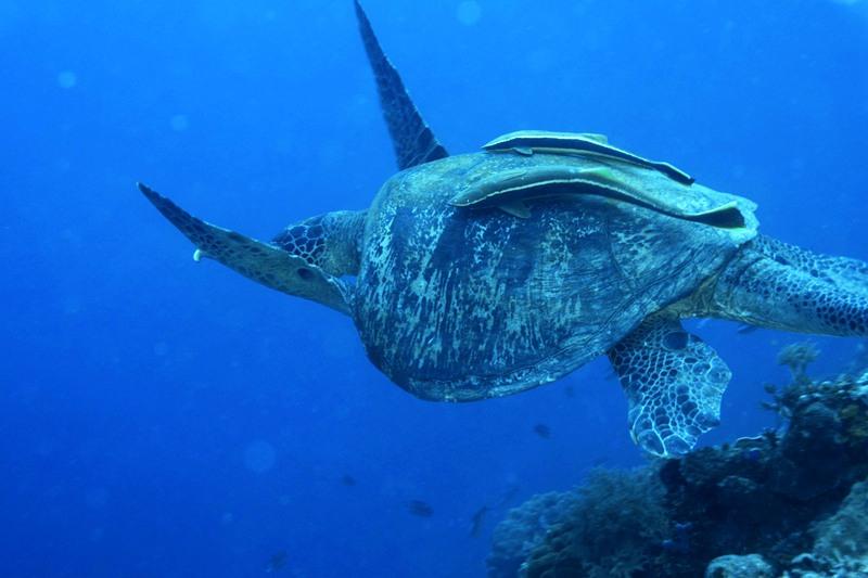 图巴海洋保护区,图巴海洋保护区,Tubod Marine Sanctuary