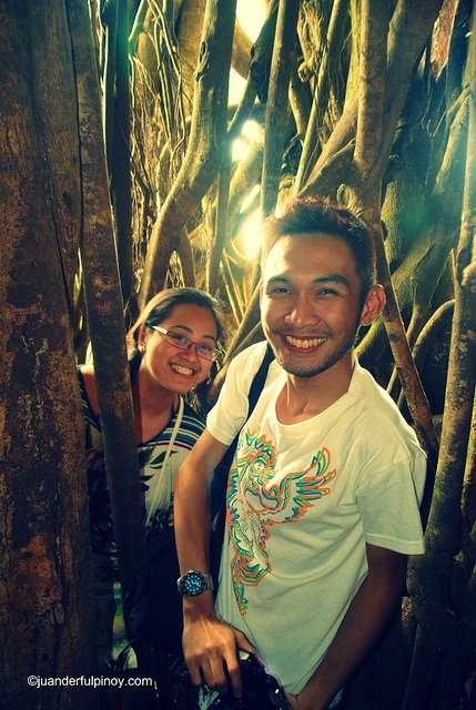 锡岛世纪大榕树,锡岛世纪大榕树,Century Old Balete Tree