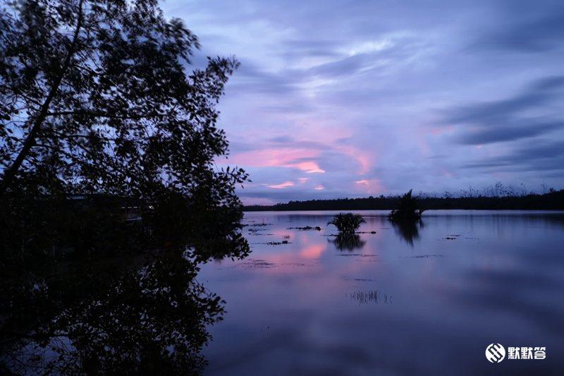 百灵红树林,百灵红树林,Beringgis Fireflies