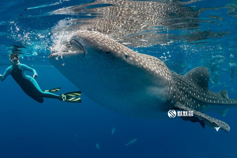 坐大巴从宿务去Oslob看鲸鲨,坐大巴从宿务去Oslob看鲸鲨,From Cebu to Oslob