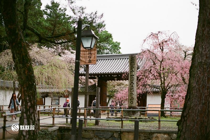 醍醐寺,醍醐寺,daigoji