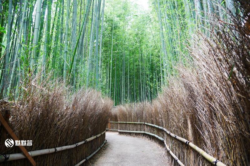 竹林小径,竹林小径,Arashiyama Bamboo Forest